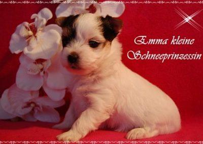 Amylie Nachzucht (4)