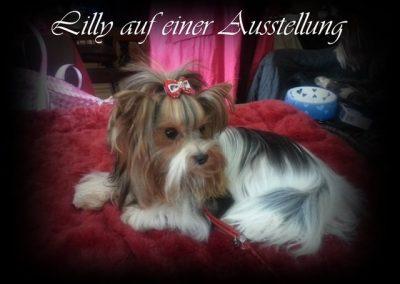 Lillyfee (10)