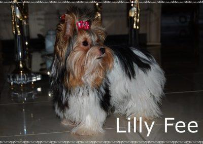 Lillyfee (11)