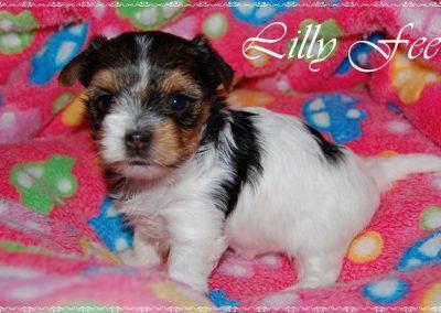 Lillyfee (15)