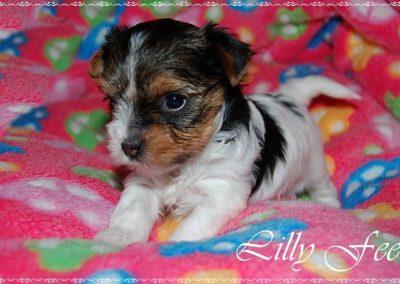 Lillyfee (16)