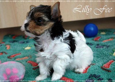 Lillyfee (19)