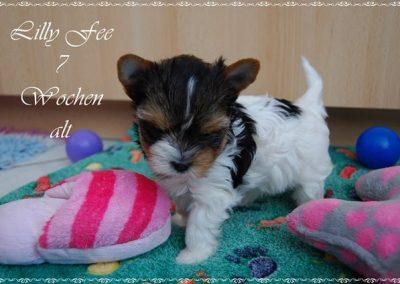 Lillyfee (2)