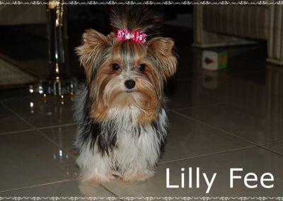 Lillyfee (26)