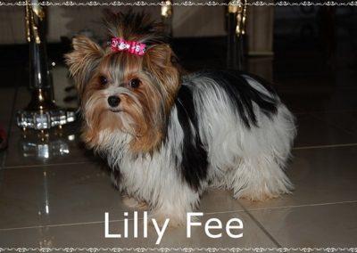 Lillyfee (27)