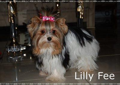Lillyfee (28)