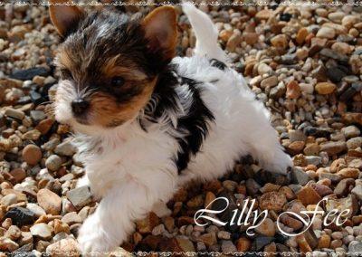 Lillyfee (3)