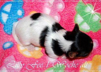 Lillyfee (4)