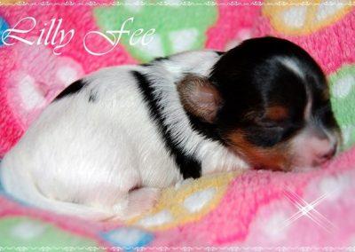Lillyfee (6)