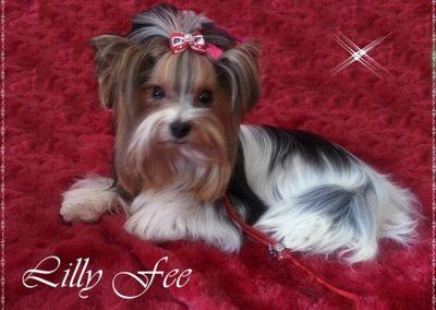 Lillyfee (7)
