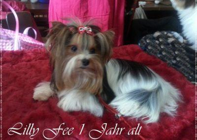Lillyfee (8)
