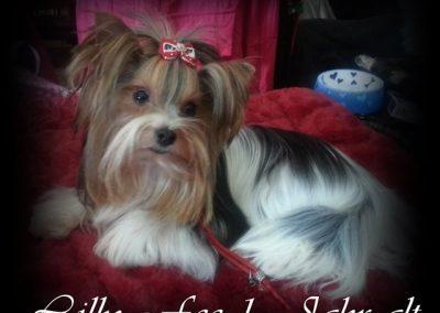 Lillyfee (9)