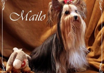 Mailo (1)