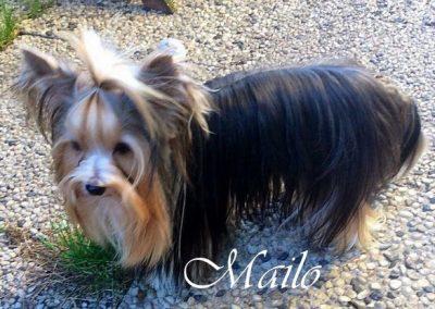 Mailo (2)