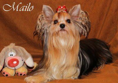 Mailo (4)