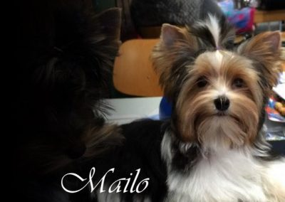 Mailo (5)