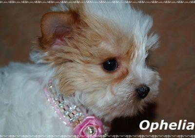 ophelia 7,5w (6)