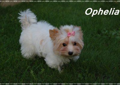 ophelia12w (1)