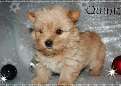 quinia6w (9)