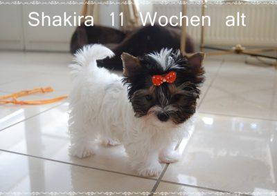 shakira12w (12)