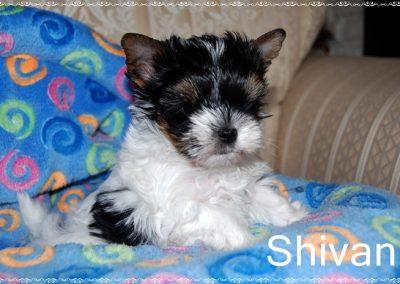 shivan 7w (1)
