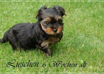 lieschen (10)