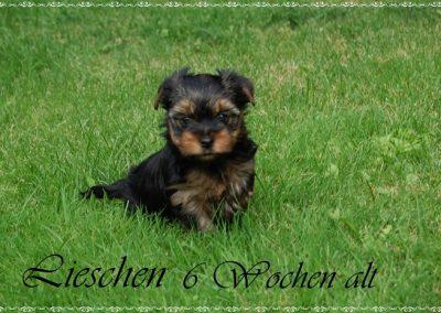lieschen (12)