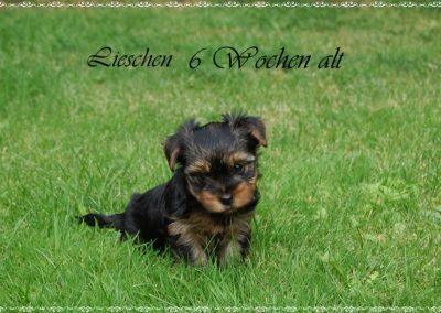 lieschen (13)