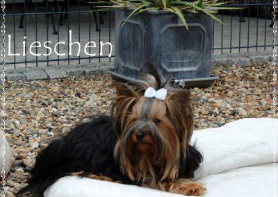 lieschen (15)