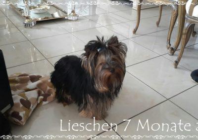 lieschen (17)