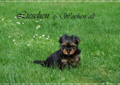 lieschen (2)