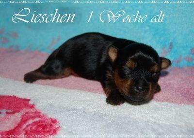 lieschen (5)