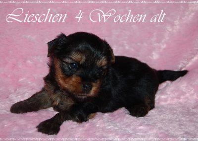 lieschen (6)