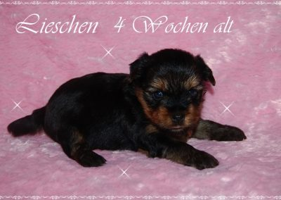 lieschen (7)