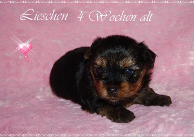 lieschen (8)