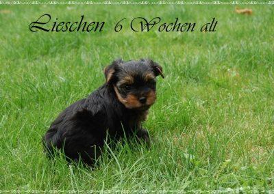 lieschen (9)