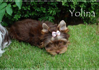 yolina (15)