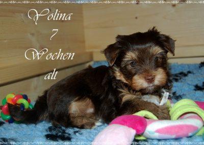yolina7w (7)