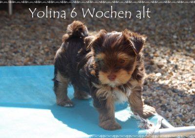yolina8w (1)