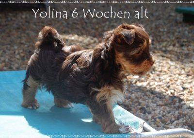 yolina8w (4)
