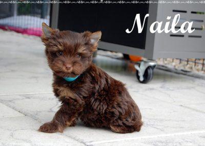 naila9w (9)