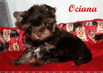 ociana9w (13)