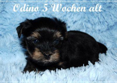 odino 5w (4)