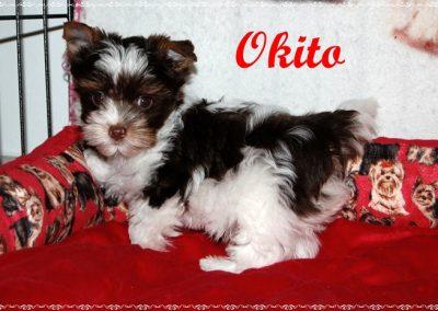 okito9w (13)