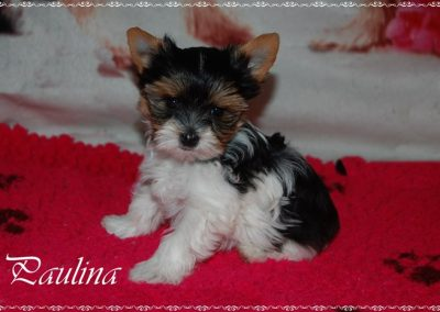 paulina 8w (2)