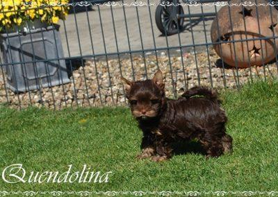 quendolina 8w (2)